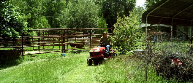 Mowing – Friday on the Farm