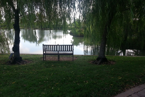 Bench between willows in Memory Park