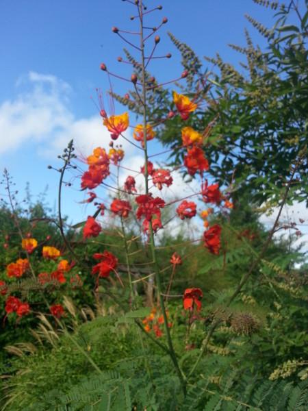 Orange Flower at Memory Park