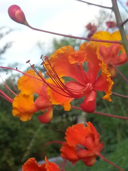 Straight on Orange Flower - Memory Park