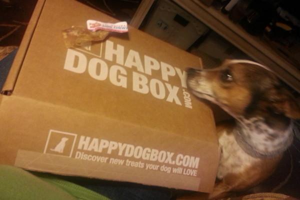 HappyDogBox - Maggie's Favorite!