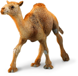 Safari Ltd. Camel