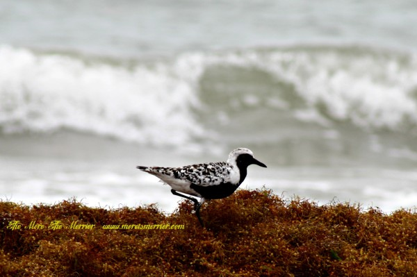 Doin' the Seaweed Strut