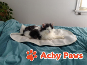Achy Paws™ Logo Picture