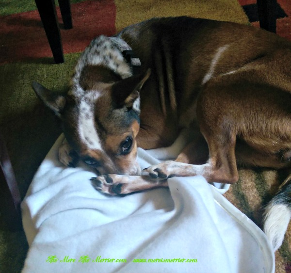 Maggie with paws on the Achy Paws™ Pet Mat