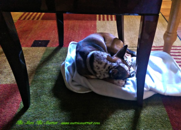 Maggie On Her Achy Paws™ Pet Mat