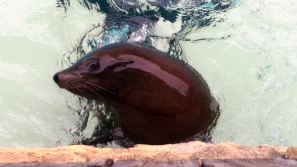 SeaWorld@ Sea Lion