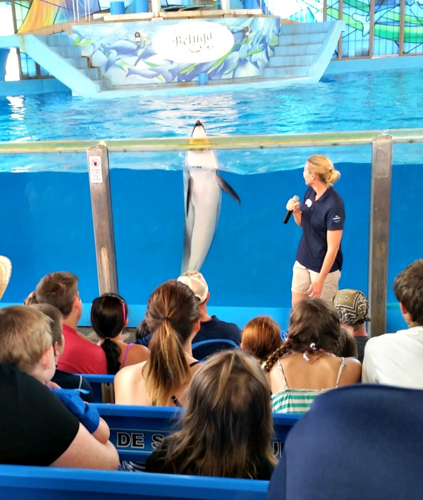 Talking with a Trainer and a Pacific Whiteside Dolphin
