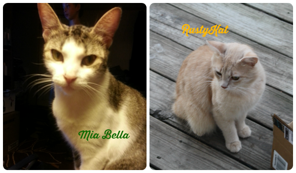 Sweet Mia Bella and RustyKat only agree on cat litter and toys