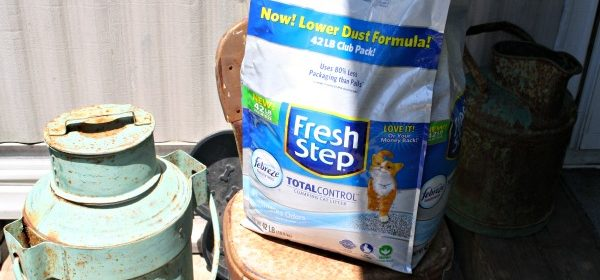 Toys and Cat Litter – Things We Agree On