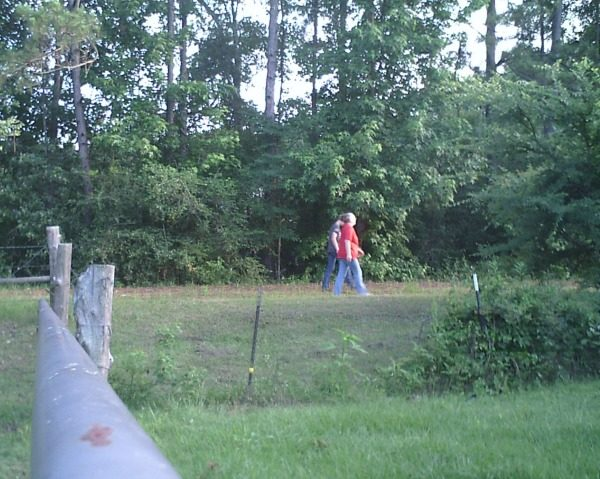 I get moving by walking the dirt road next to our property.