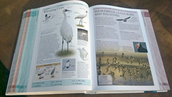 """""""Birds of North America"""" has beautiful pictures and lots of information!"""