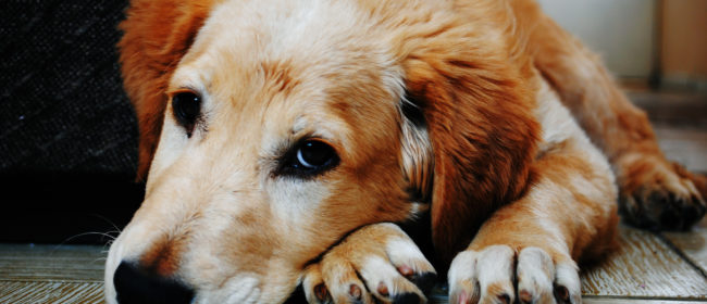 Doggy Boredom & How You Can Combat It