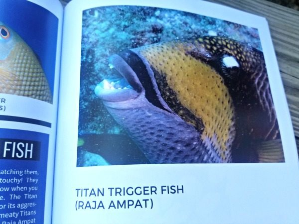 "The Titan Trigger Fish in the book ""All Fish Faces"""