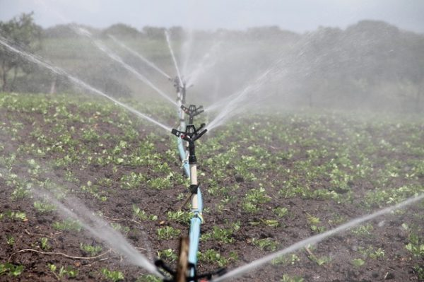 Irrigation helps in times of drought