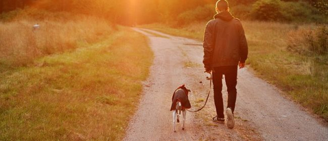 Before You Get A Dog: Things To Consider